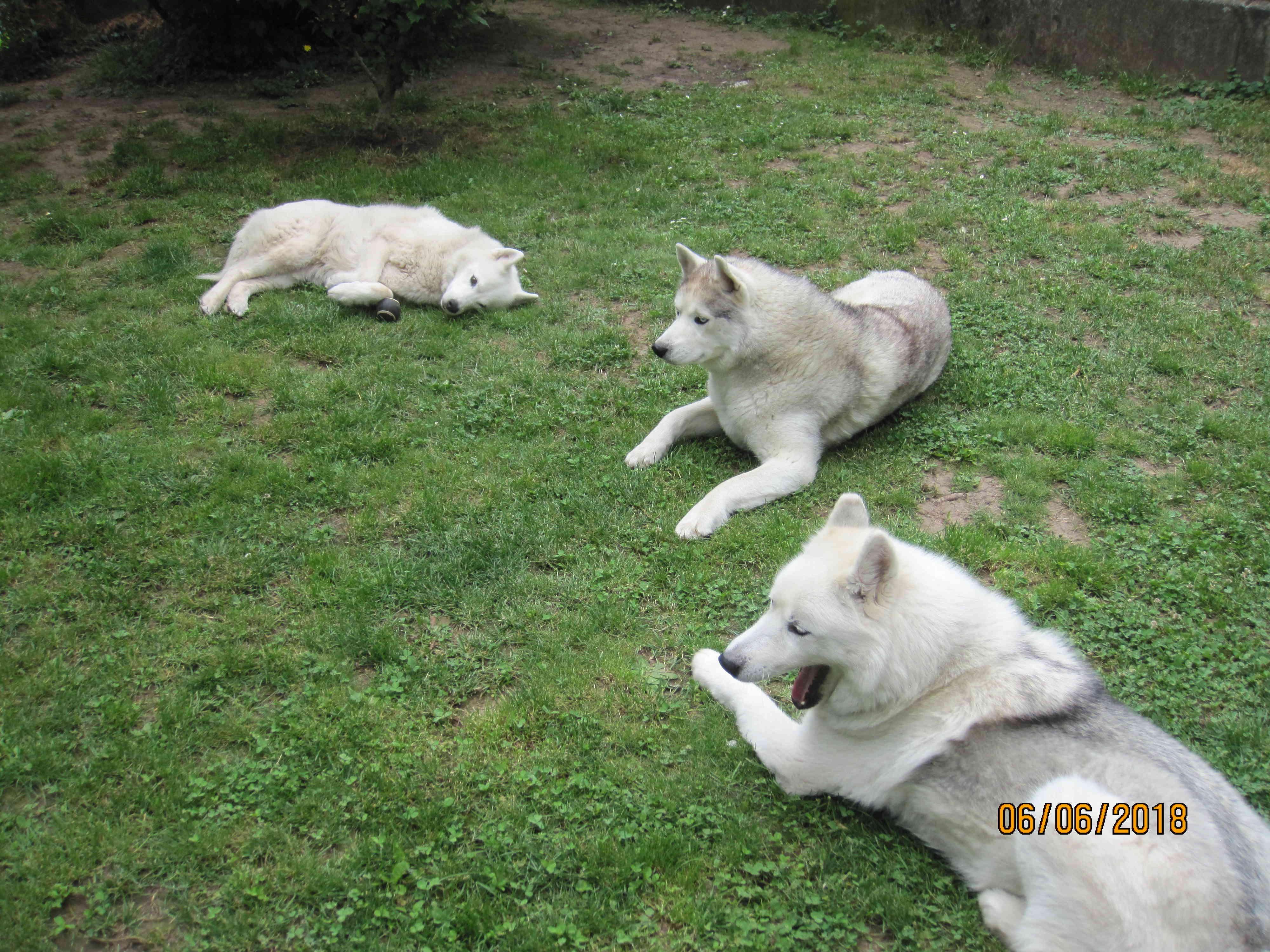 Saskia, Jiro, et leurs copains - Page 17 1_repo10
