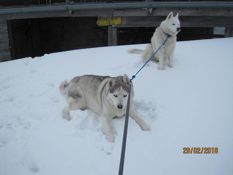 Saskia, Jiro, et leurs copains - Page 4 2117