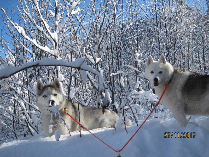 Saskia, Jiro, et leurs copains 220