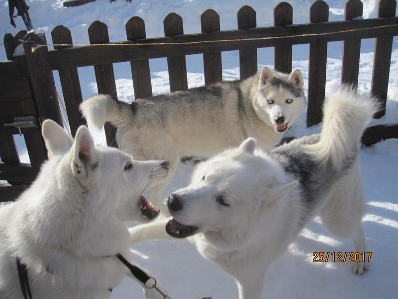 Saskia, Jiro, et leurs copains - Page 2 2213