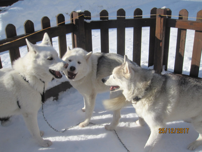 Saskia, Jiro, et leurs copains - Page 2 2313