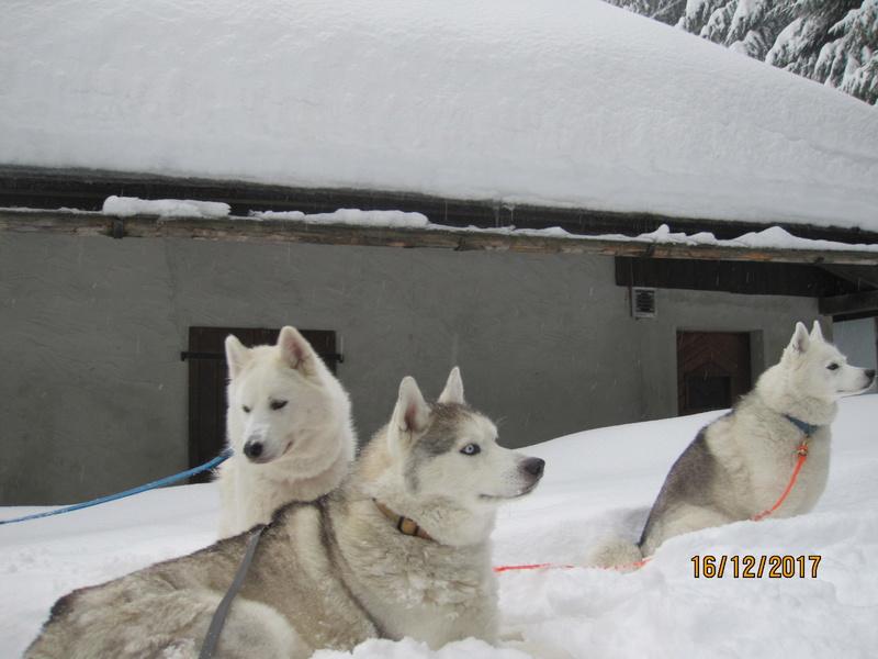 Saskia, Jiro, et leurs copains - Page 2 236