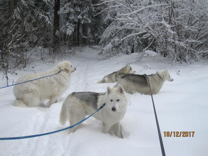 Saskia, Jiro, et leurs copains - Page 2 237