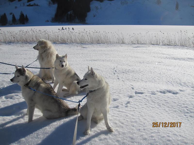 Saskia, Jiro, et leurs copains - Page 2 241