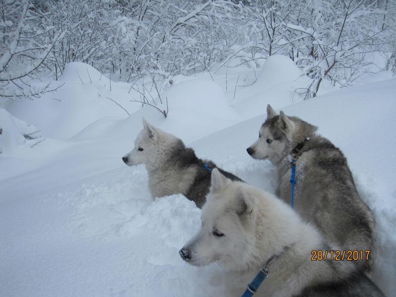Saskia, Jiro, et leurs copains - Page 2 244