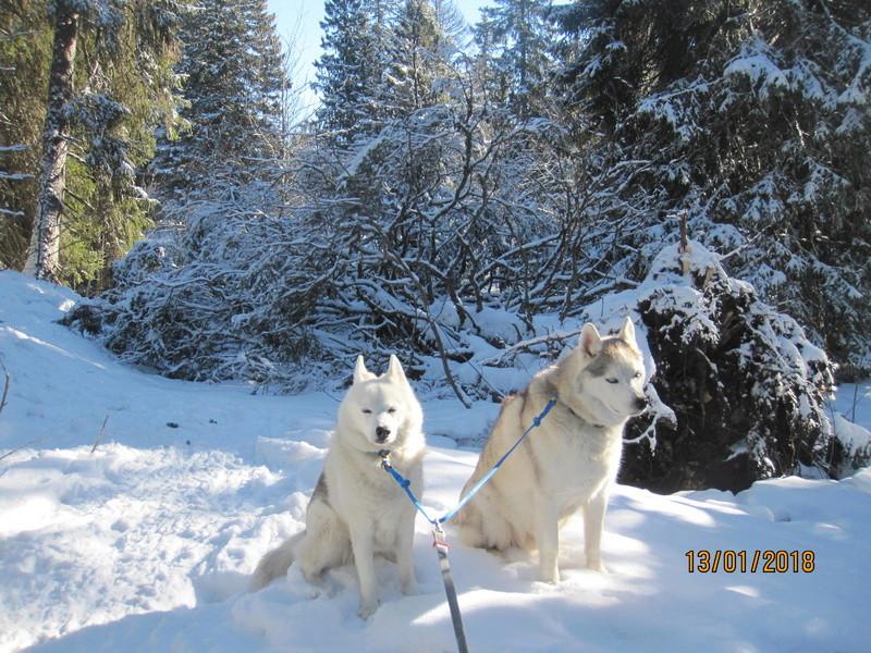 Saskia, Jiro, et leurs copains - Page 10 250