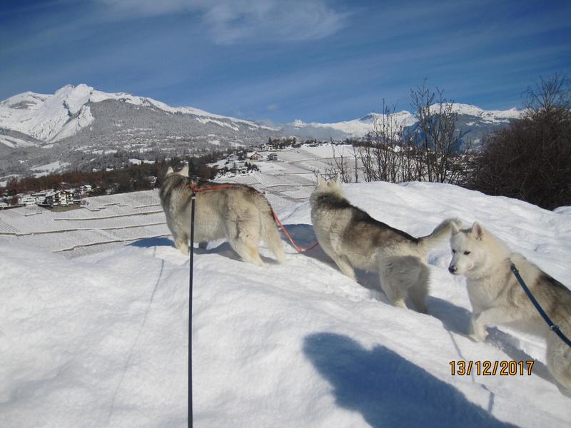 Saskia, Jiro, et leurs copains - Page 5 2510