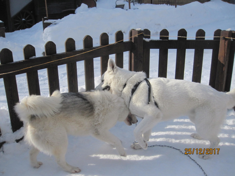 Saskia, Jiro, et leurs copains - Page 2 2512