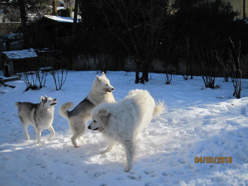 Saskia, Jiro, et leurs copains - Page 4 2513