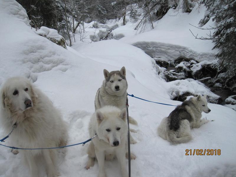 Saskia, Jiro, et leurs copains - Page 3 268