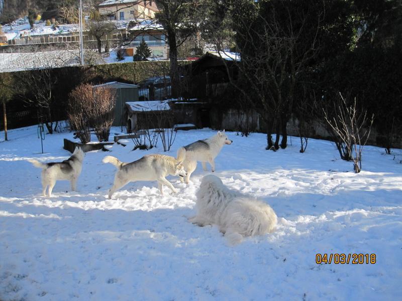 Saskia, Jiro, et leurs copains - Page 4 2712