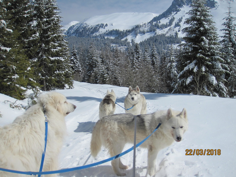 Saskia, Jiro, et leurs copains - Page 4 2714