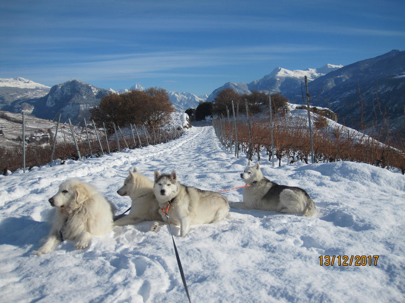 Saskia, Jiro, et leurs copains - Page 2 2810