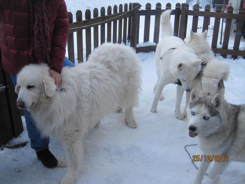 Saskia, Jiro, et leurs copains - Page 2 2811