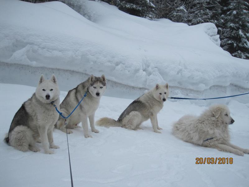 Saskia, Jiro, et leurs copains - Page 4 282