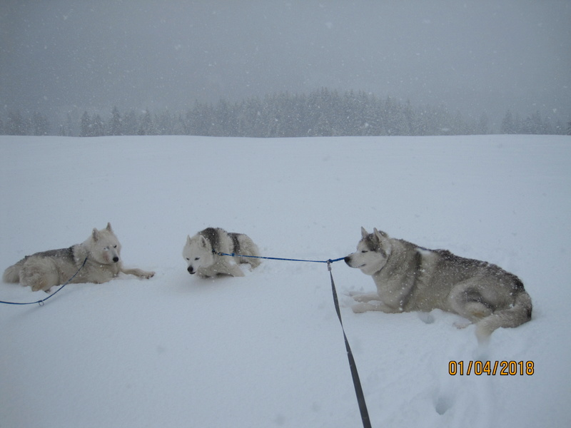 Saskia, Jiro, et leurs copains - Page 4 286