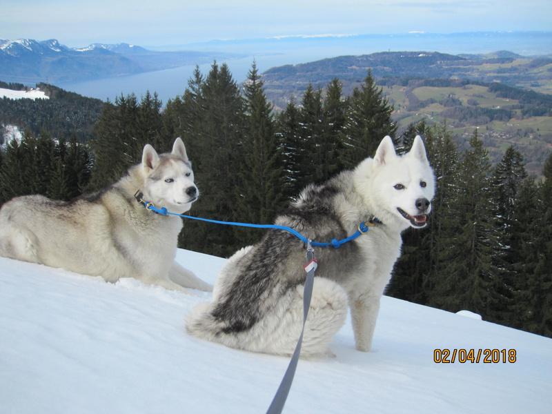 Saskia, Jiro, et leurs copains - Page 4 287