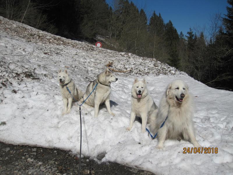 Saskia, Jiro, et leurs copains - Page 4 289