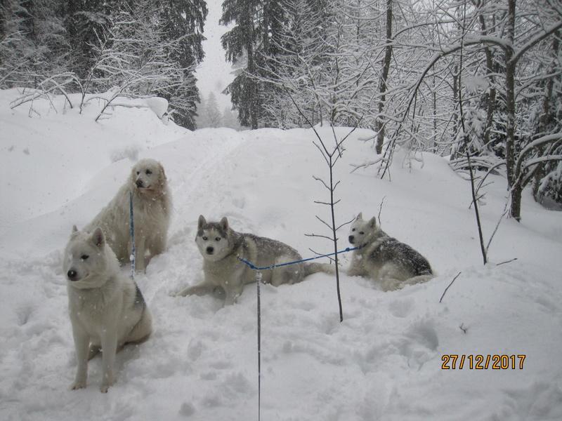 Saskia, Jiro, et leurs copains - Page 2 2_11