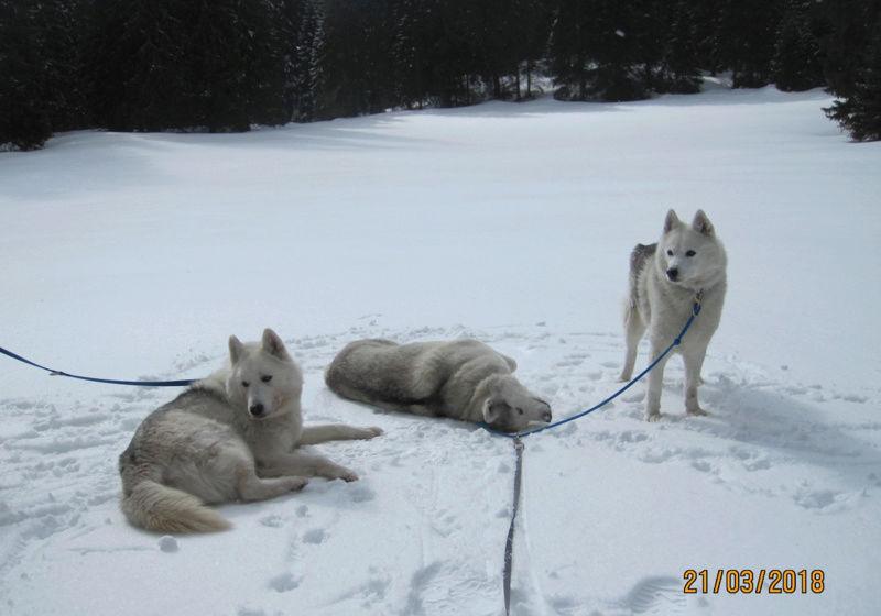 Saskia, Jiro, et leurs copains - Page 15 2_12