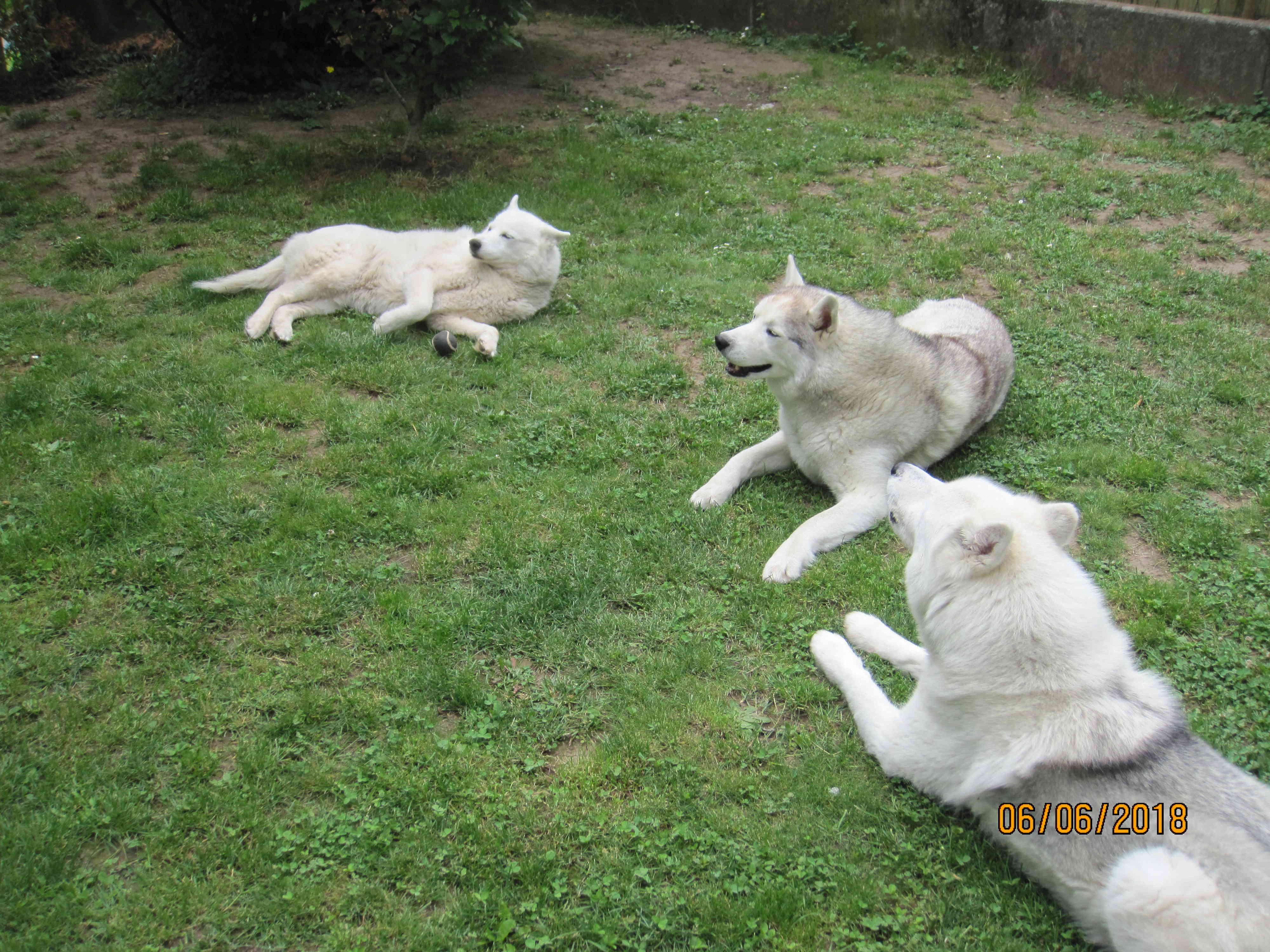 Saskia, Jiro, et leurs copains - Page 17 2_la_t10