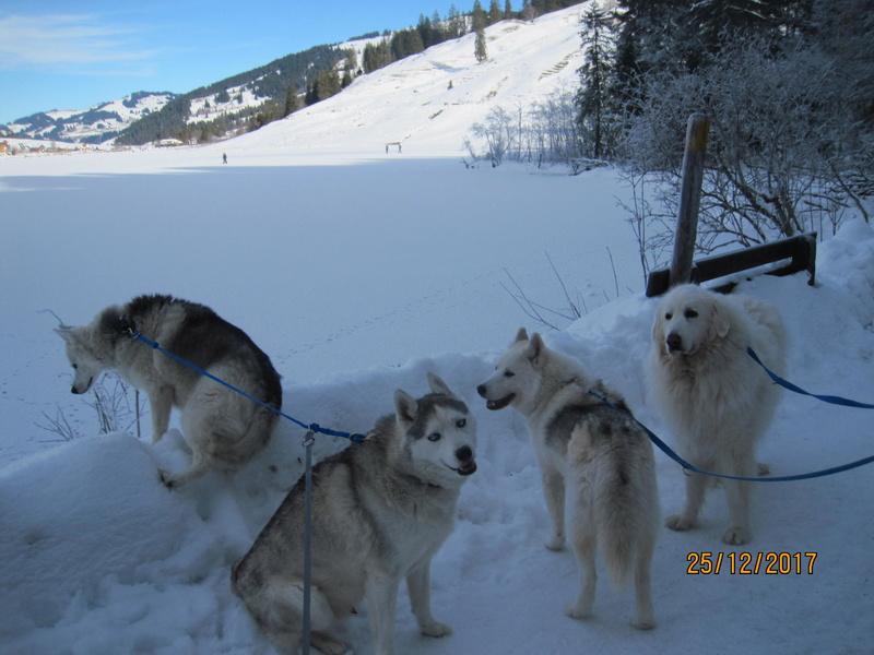 Saskia, Jiro, et leurs copains - Page 2 3111