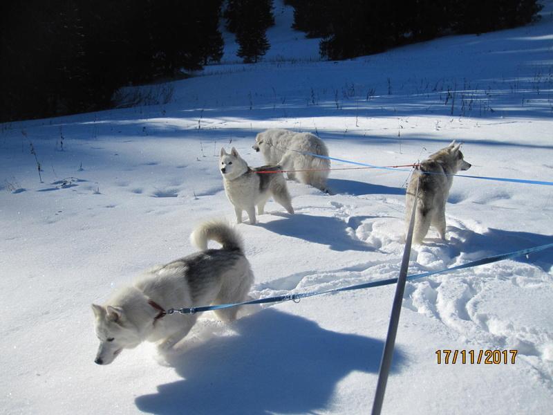 Saskia, Jiro, et leurs copains - Page 3 315