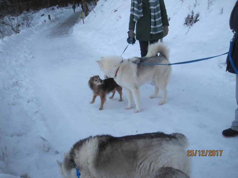 Saskia, Jiro, et leurs copains - Page 2 3311