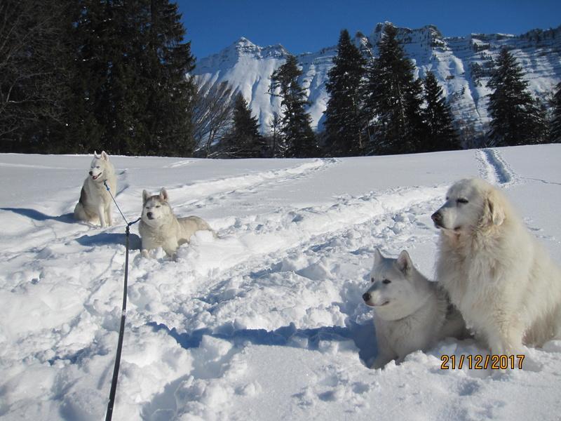 Saskia, Jiro, et leurs copains - Page 2 340