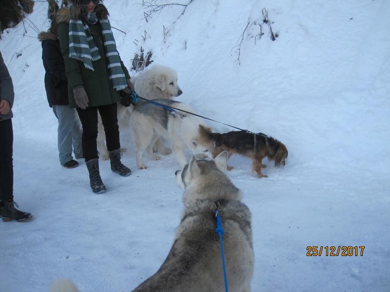 Saskia, Jiro, et leurs copains - Page 2 3411