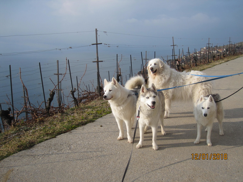 Saskia, Jiro, et leurs copains - Page 10 350