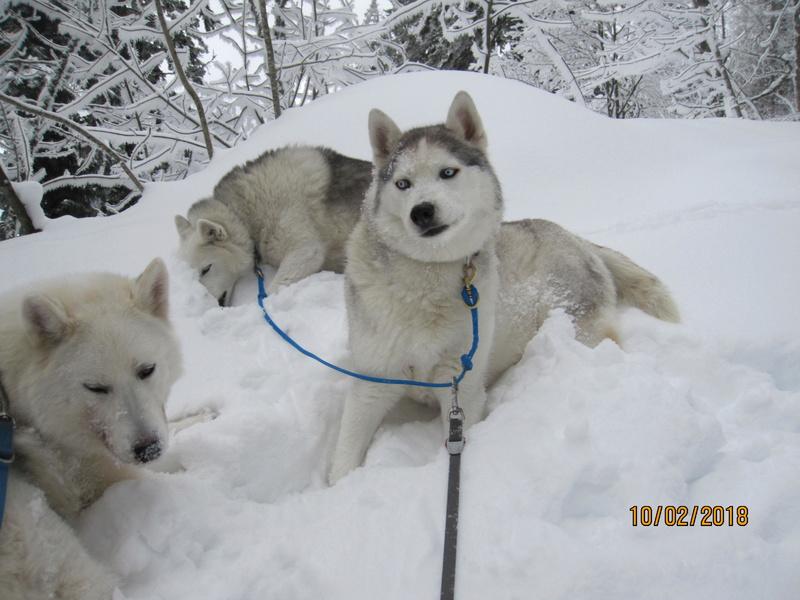 Saskia, Jiro, et leurs copains - Page 3 364