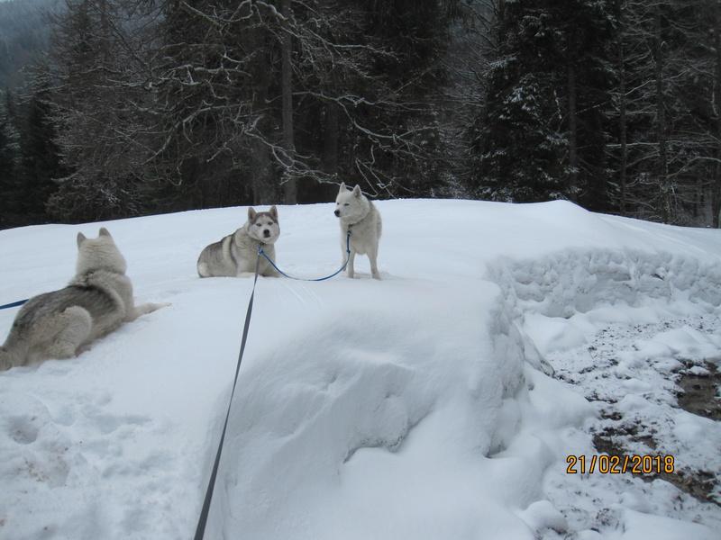 Saskia, Jiro, et leurs copains - Page 3 367