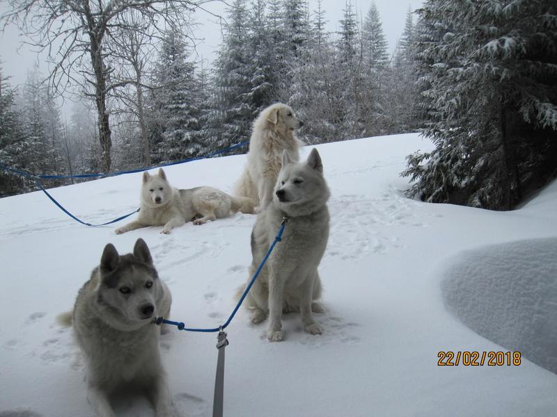 Saskia, Jiro, et leurs copains - Page 3 368