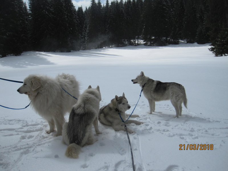 Saskia, Jiro, et leurs copains - Page 4 381