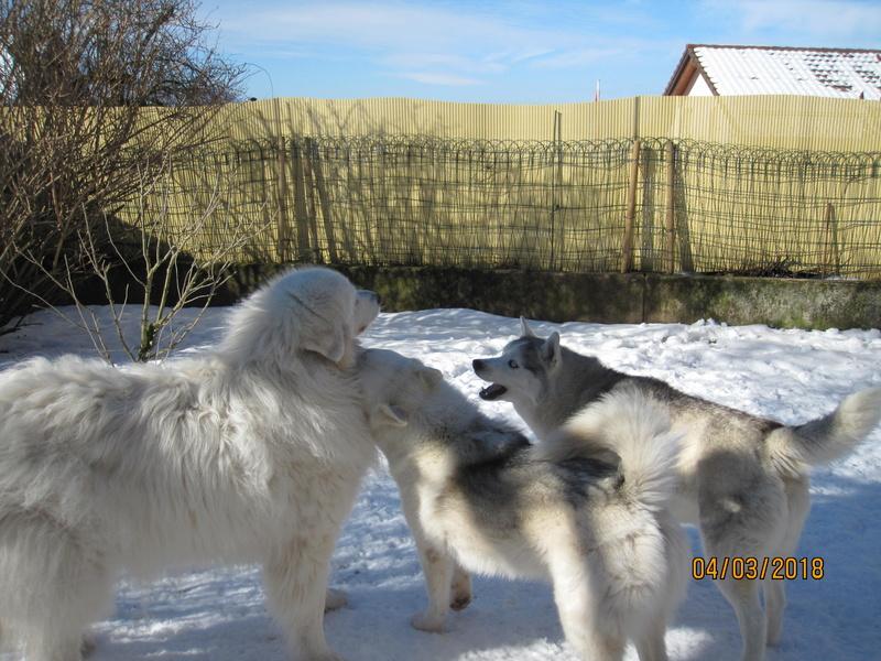 Saskia, Jiro, et leurs copains - Page 4 3812