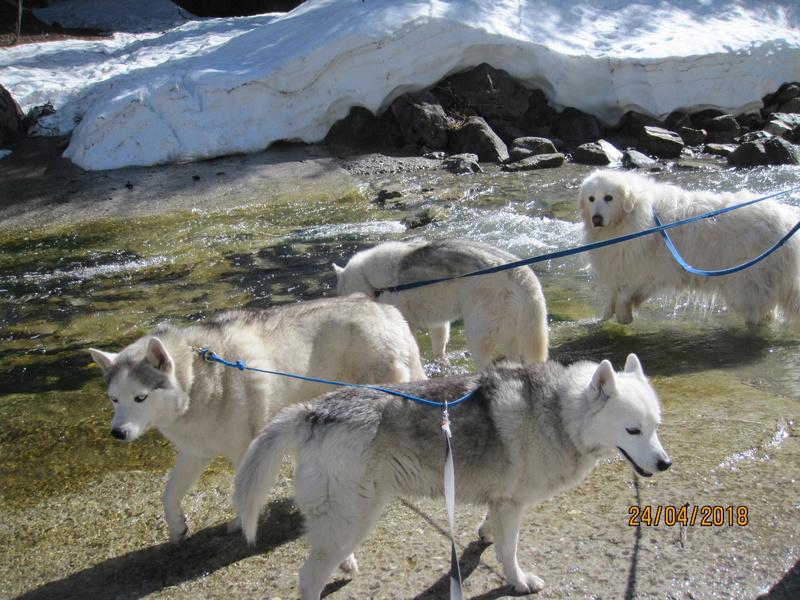 Saskia, Jiro, et leurs copains - Page 4 387