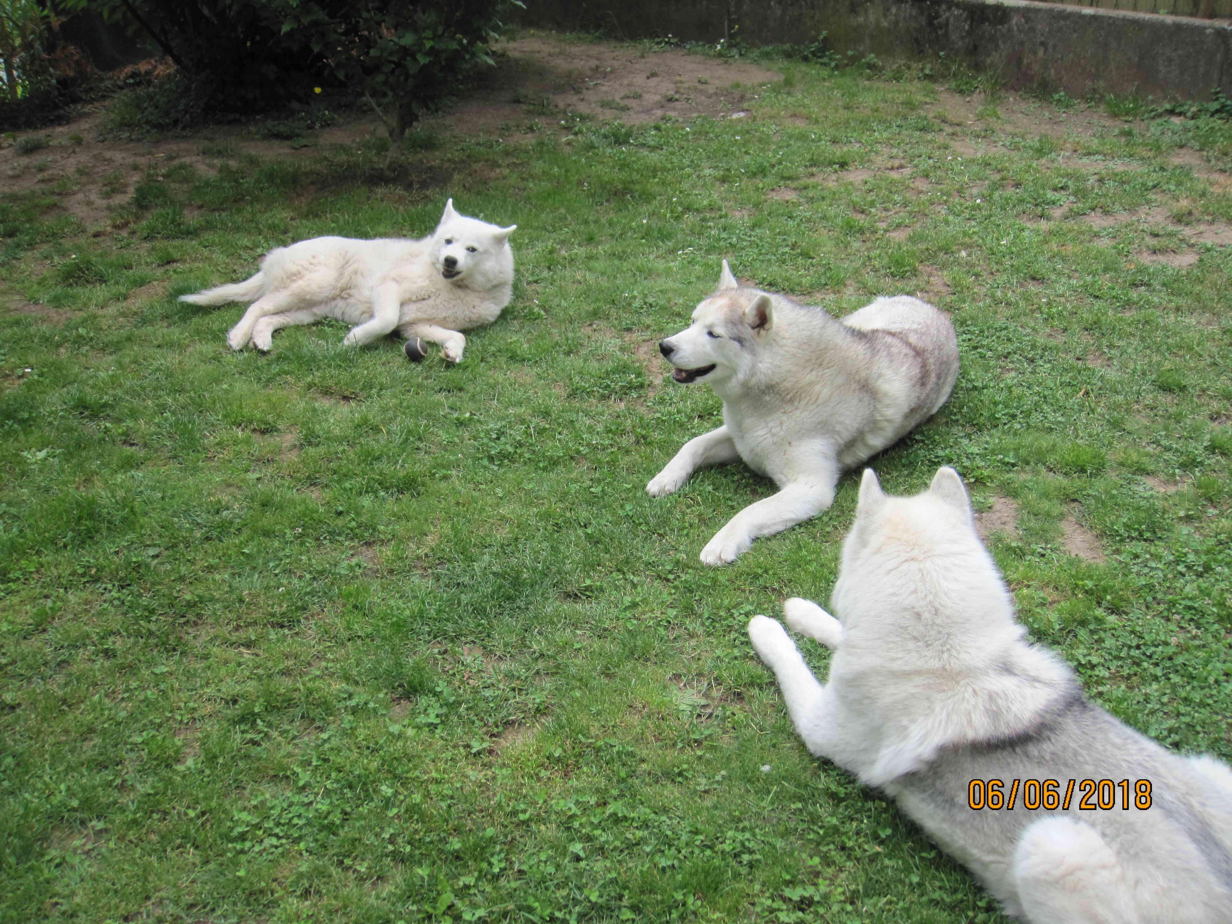 Saskia, Jiro, et leurs copains - Page 17 3_sask10