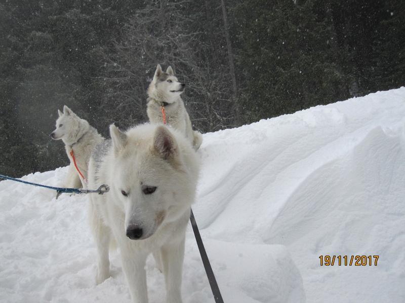 Saskia, Jiro, et leurs copains - Page 3 417