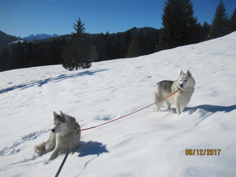 Saskia, Jiro, et leurs copains - Page 5 427