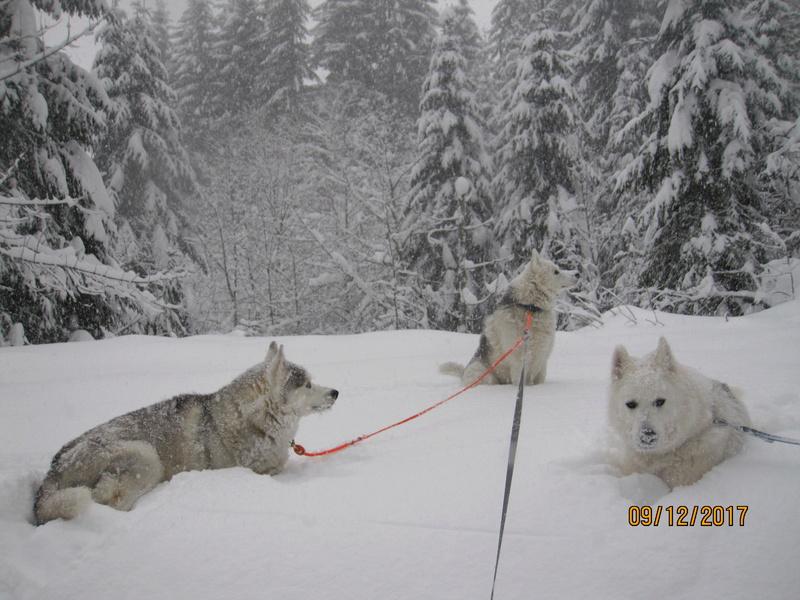 Saskia, Jiro, et leurs copains - Page 5 430