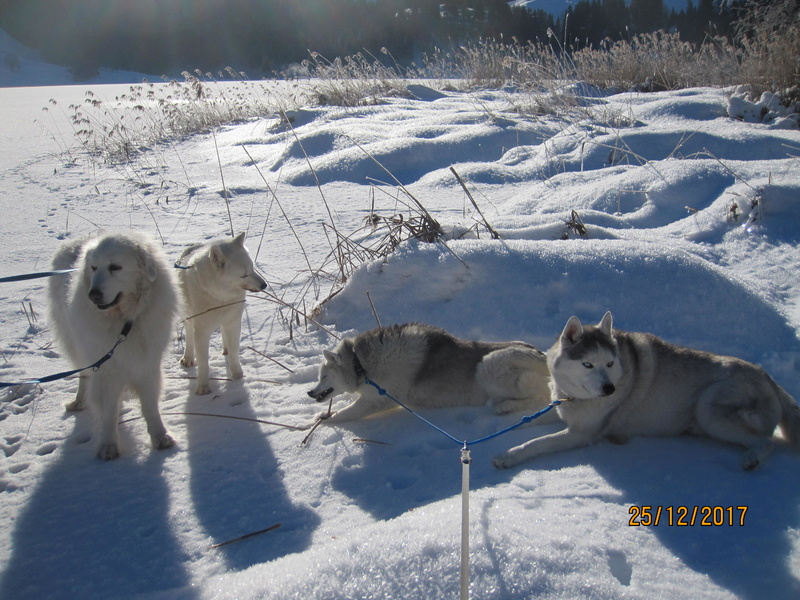 Saskia, Jiro, et leurs copains - Page 2 442