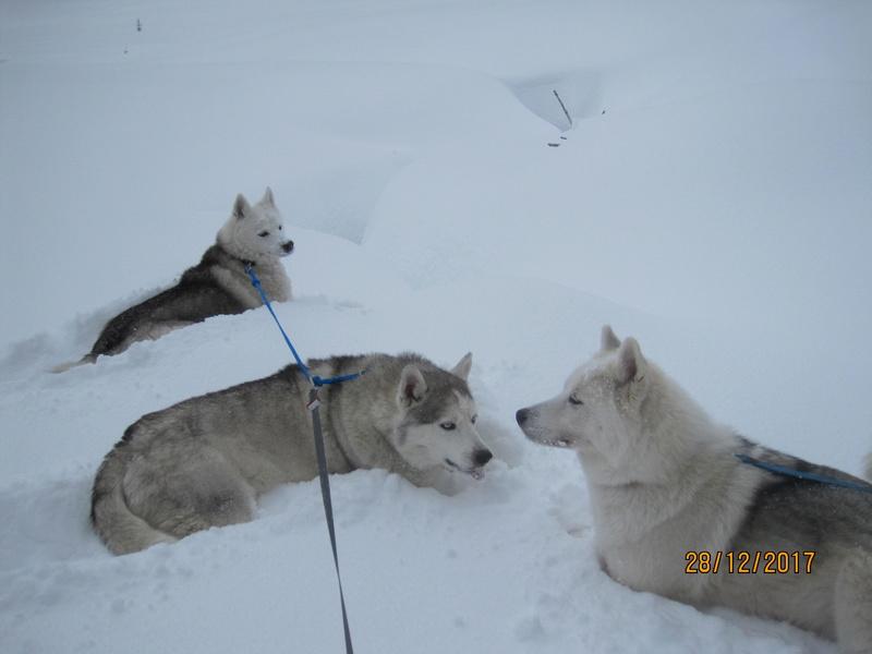 Saskia, Jiro, et leurs copains - Page 2 445