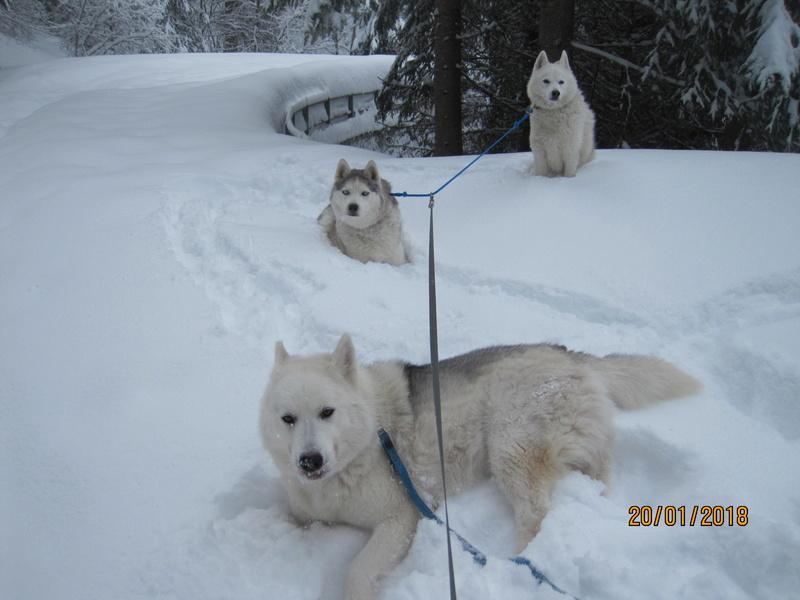 Saskia, Jiro, et leurs copains - Page 11 454