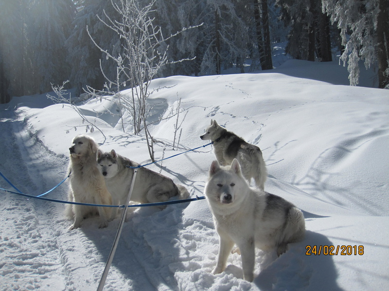 Saskia, Jiro, et leurs copains - Page 3 469
