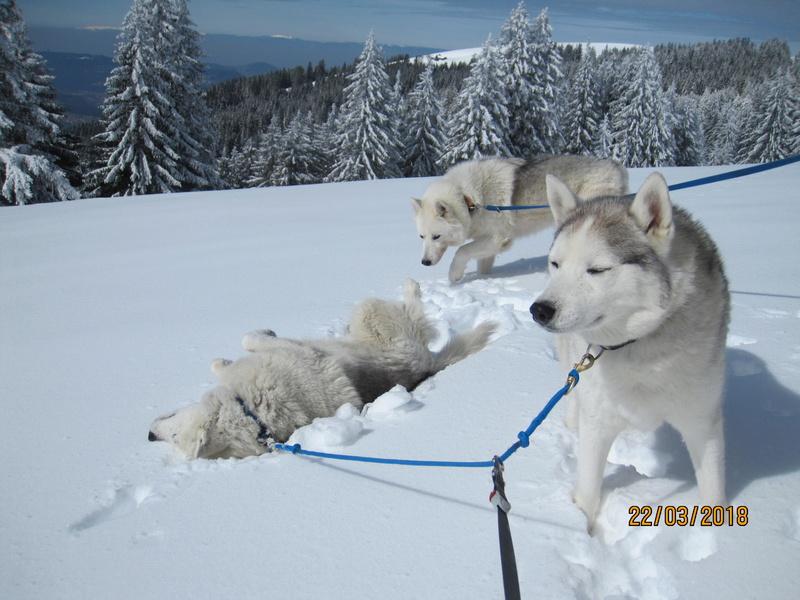 Saskia, Jiro, et leurs copains - Page 4 479