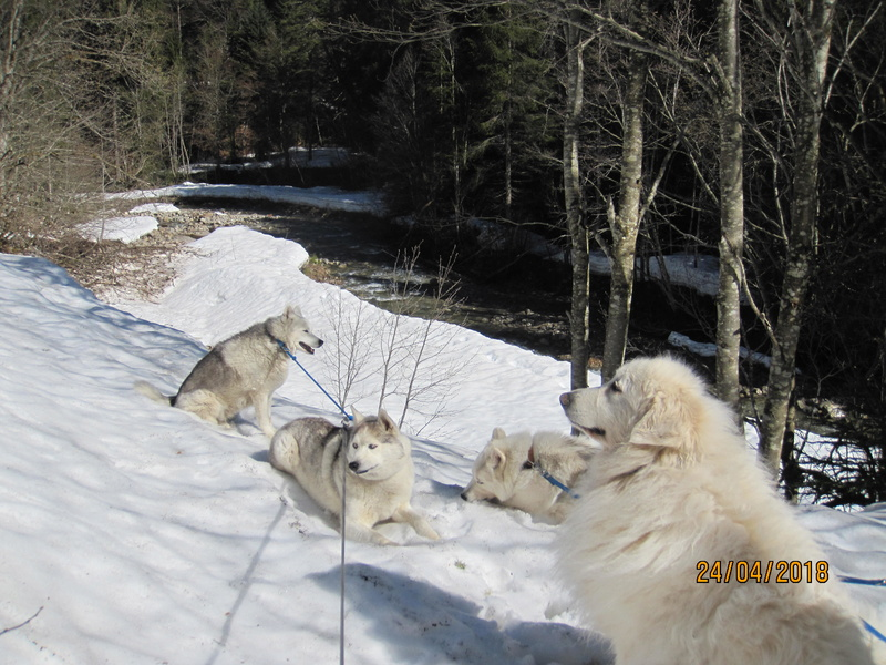 Saskia, Jiro, et leurs copains - Page 4 484