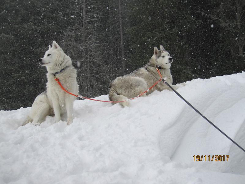 Saskia, Jiro, et leurs copains - Page 3 518
