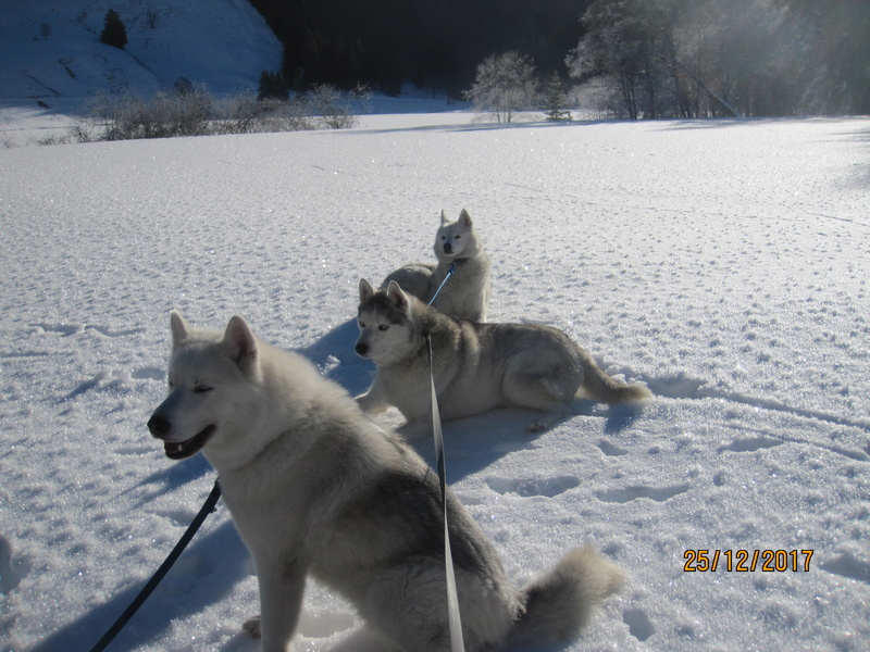 Saskia, Jiro, et leurs copains - Page 2 542