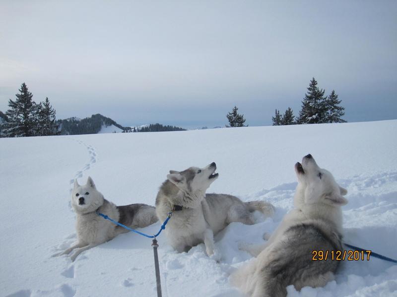 Saskia, Jiro, et leurs copains - Page 2 545
